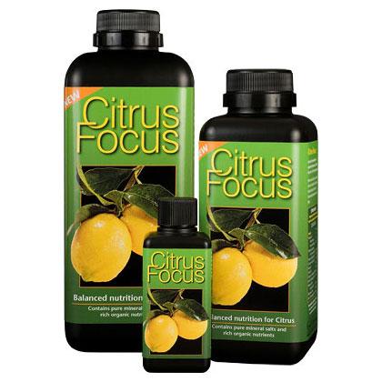 Citrus Focus